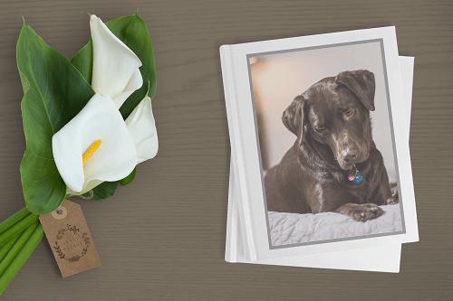 Pet Cremation Sydney NSW - Pet Memorial Australia