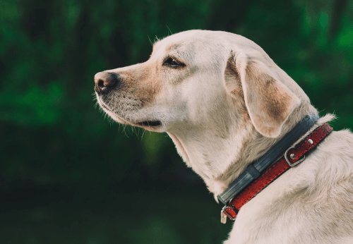 When to Euthanize Dog that is old in Sydney