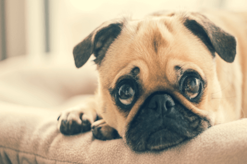 Loss Of Dog Sympathy Quotes