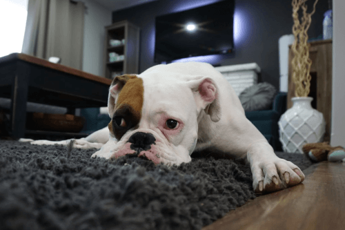 When is the right time to Put your Dog Down Checklist