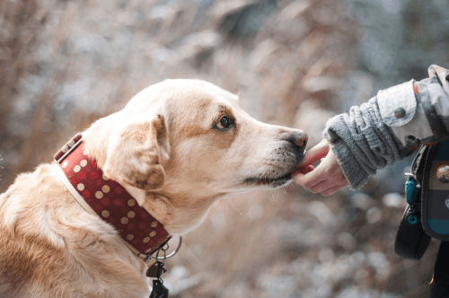Euthanize a dog how to cope with grief