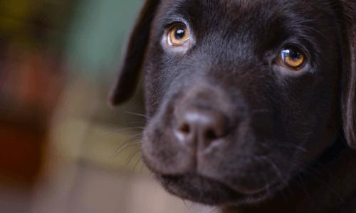 Dog Euthanasia Cost Sydney