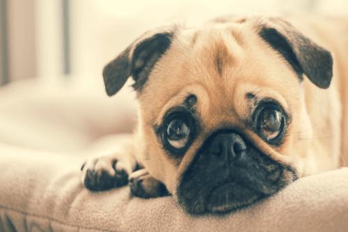 Loss Of Dog Sympathy Quotes