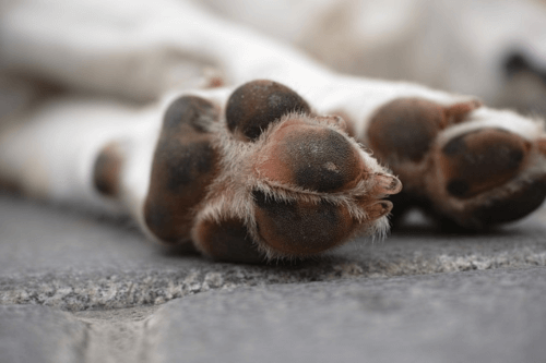 Pet Urns For Deceased Pets in Australia