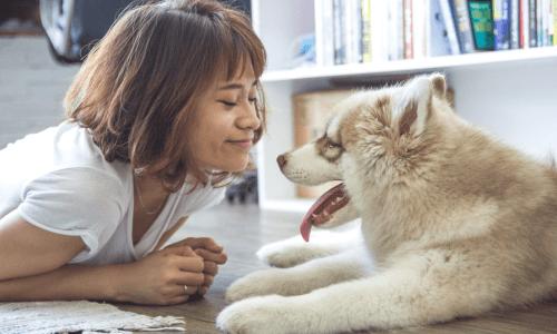 When to Put your Dog Down Checklist