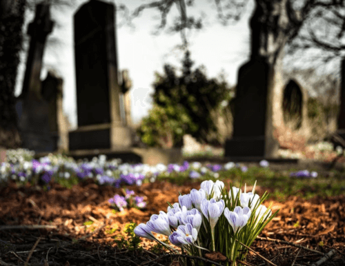 can pets be buried in human cemeteries