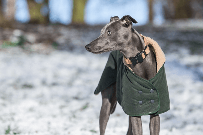 how to keep your dog warm on a cold winter day